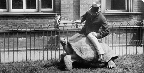 walter-rothschild-turtle-490_114832_1