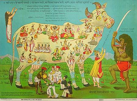 Sacred_cow2