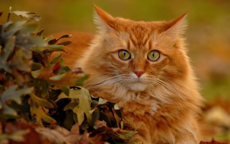 6980484-cute-red-cat.jpg