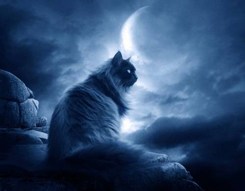 Черный-кот