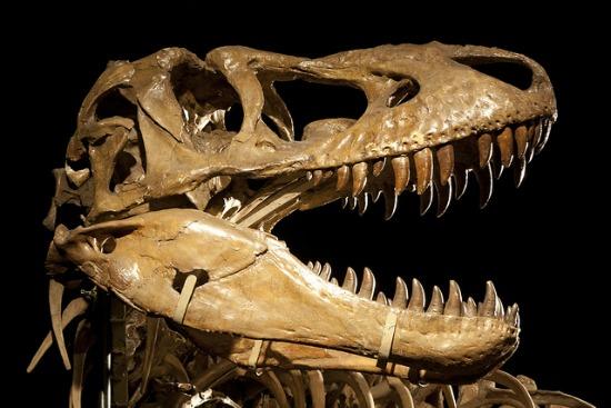 tarbosaurus-skull.jpg