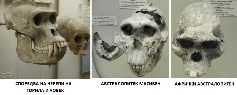 vrste-drevnih-predstavnika-arhantropa-768x274.png